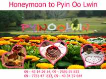 Pyin Oo Lwin Honeymoon Package ( Diamond Package )